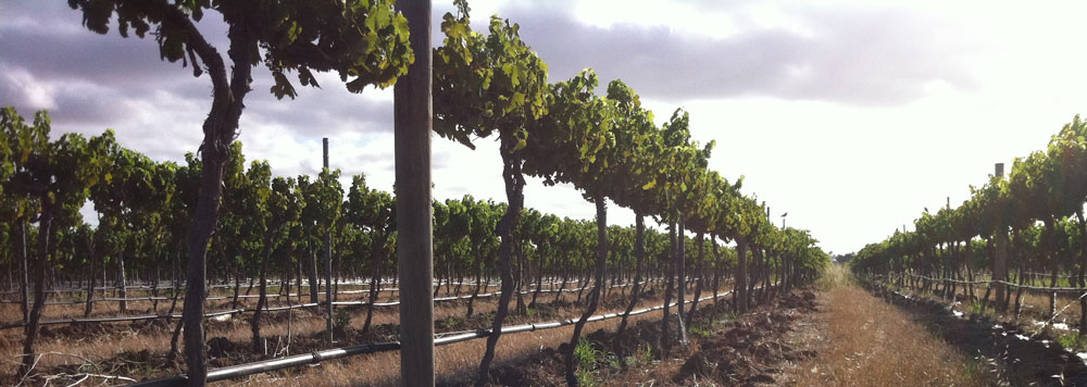 About Raw Vine Estate Organic Preservative Free Wines